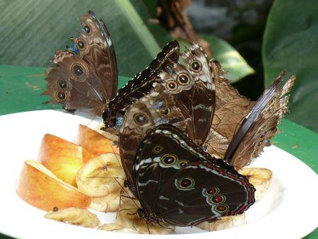 Well fed butterflies