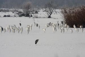 Little Balaton in winter