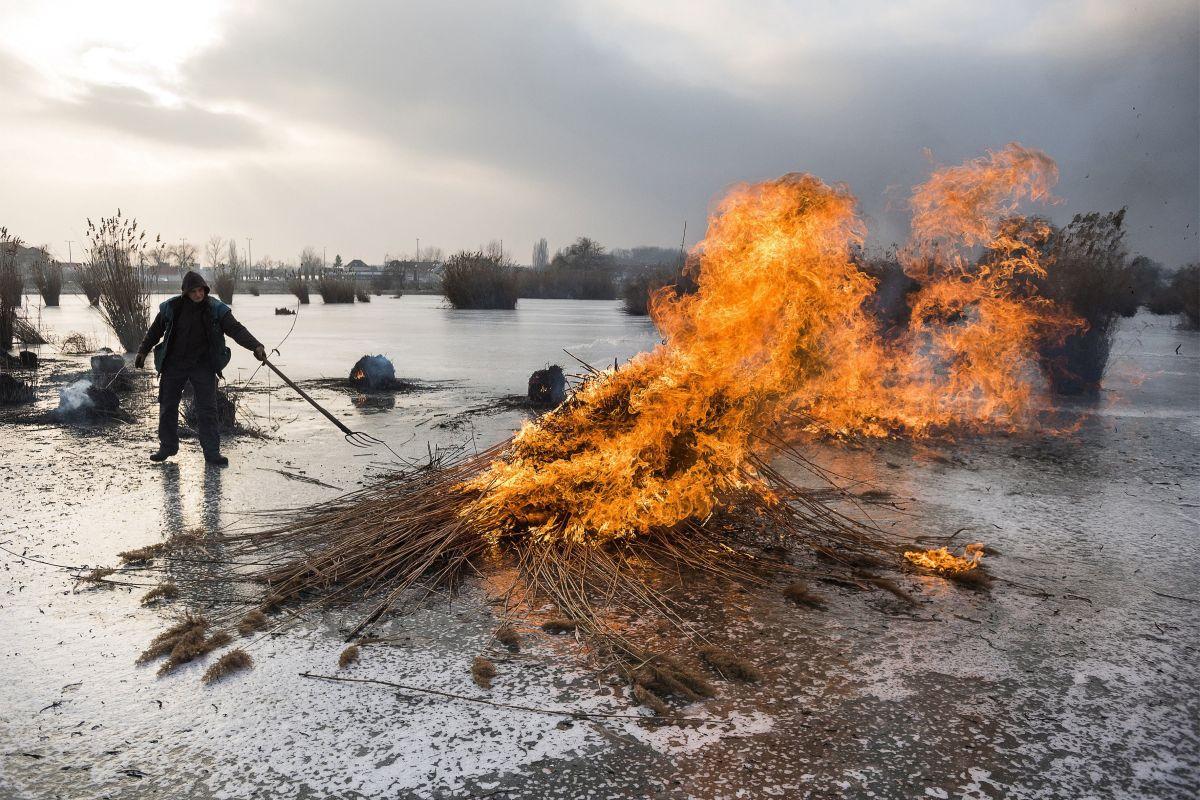 Burning the reed near Nyíregyháza, East Hungary (Photo: Attila Balázs)