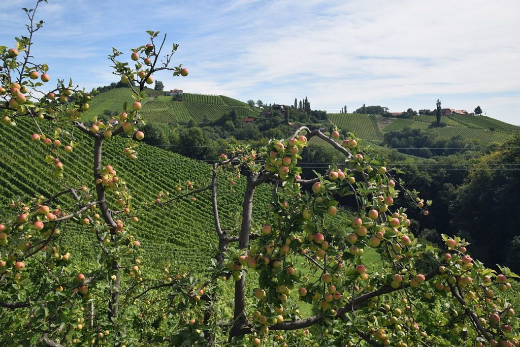 South Styria vineyards